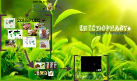Copy of Entomophagy