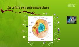 La célula y su infraestructura