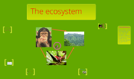 animal ecosystem of the chimpanzie