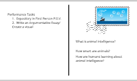 Copy of Collection 2:  Animal Intelligence