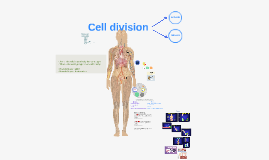 Cell division and cancer-Skyline