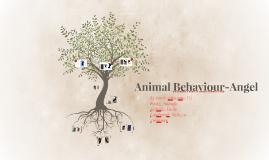 Animal Behaviour-Angel