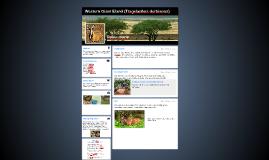 Western Giant Eland (Tragelaphus derbianus)