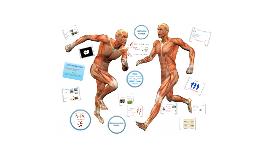 Copy of GCSE PE Muscular System