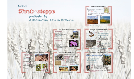 Shrub-steppe