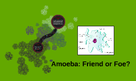 Amoeba: Friend or FOE?