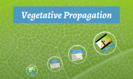 Copy of Vegetative Propogation