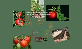 Tomato Fertilizing By: Scott Feldsted and Spence Moore