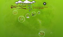 Ökosystem Regenwald