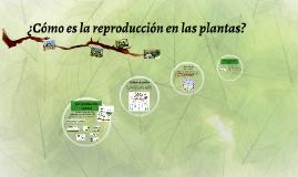 ¿Cómo es la reproducción en las plantas?
