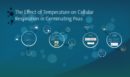 The Effect of Temperature on Cellular Respiration in Germina