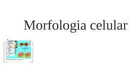 Morfologia celular