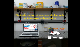 5 Efeito da metformina no metabolismo de animais ovariectomiza
