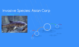 Invasive Species: Asian Carp