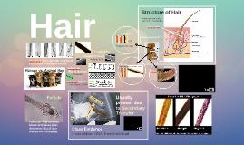 Hairs & Fibers