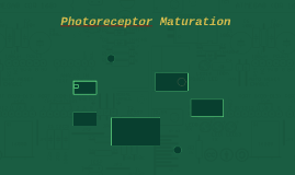 Photoreceptor Maturation