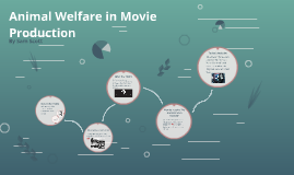 Animal Welfare in Movie Production