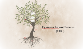 Copy of Cyanometer on Cassava
