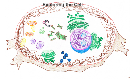 Cell Exploration