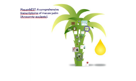 MacawbEST: A comprehensive transcriptome of macaw palm (Acro