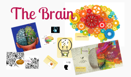 Copy of Brain Poster by Danielle Kenney