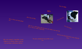 Copy of My puppy.