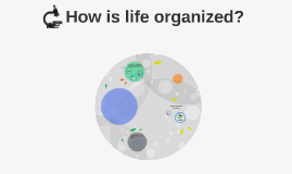 How is life organized?