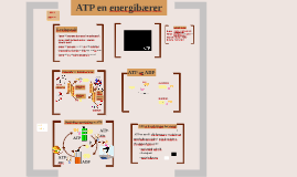 ATP en energibærer