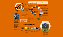 Infografia Tarwi