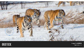 Tigers Airel gullatt,yulissa gonzalez