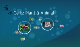 Cells: Plant & Animal