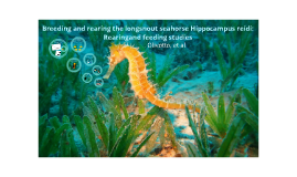 Breeding and rearing the longsnout seahorse Hippocampus reidi: Rearingand feeding studies