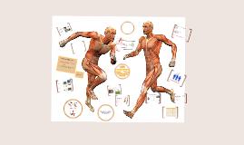 AQA GCSE PE Muscular System