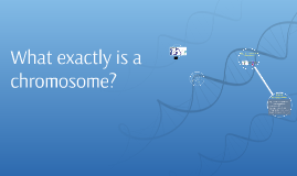 What exactly is a chromosome?