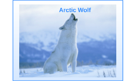 Endangered species profject (Arctic Wolf)