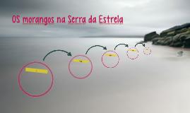 A cultura dos morangos na Serra da Estrela