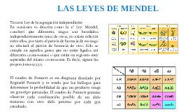 LAS LEYES DE MENDEL PARTE 3 JUAN MIGUEL GUERRA INSANDARA