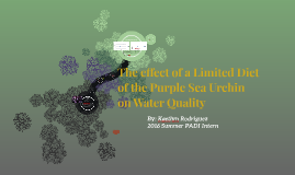 The effect of a constrained diet of the Purple Sea Urchin on