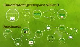 I Medio, Biología, Unidad 3: Especialización y transporte celular II + Fotosíntesis