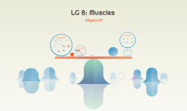 LG 8: Muscles