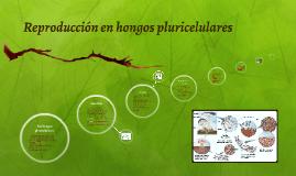 Copy of Reproducción en hongos pluricelulares