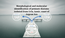 Copy of Morphological and molecular identification of pennate diatom