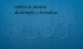 cultivo de plantas  medicinales y hortalizas