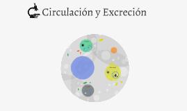 Circulación y Excreción