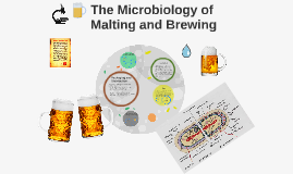 The Microbiology of Malting and Brewing