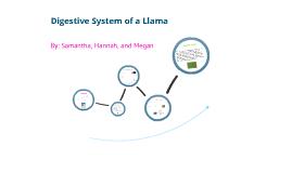 Llama Digestive System