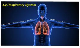 1.2 Respiratory System