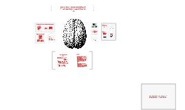 Dynamiczne Bodźce w Badaniach Neuropsychologicznych Baza Filmów Pobudzających - Wlidacja oraz Badanie fMRI
