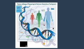 Gene Linkage/Mapping & Human Genetics/Pedigrees
