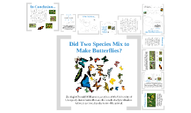 Did Two Species Mix to Make Butterflies?